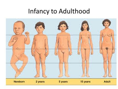 Infancy to Adulthood.