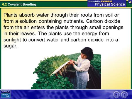 Plants absorb water through their roots from soil or from a solution containing nutrients. Carbon dioxide from the air enters the plants through small.