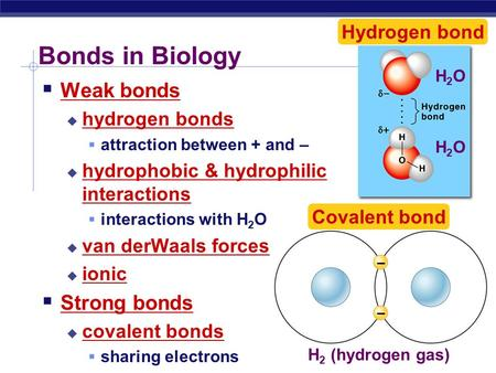 – – H 2 (hydrogen gas) Covalent bond Bonds in Biology  Weak bonds  hydrogen bonds  attraction between + and –  hydrophobic & hydrophilic interactions.