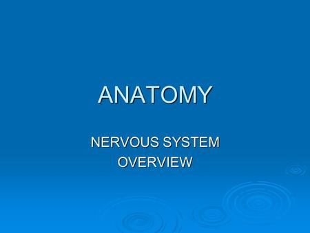 ANATOMY NERVOUS SYSTEM OVERVIEW. Nervous System  The nervous system of the human is the most highly organized system of the body.  The overall function.