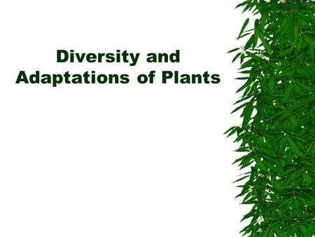 Diversity and Adaptations of Plants. Plants became established on land  Probably evolved from multi-cellular aquatic green algae (a protist)  Plants.