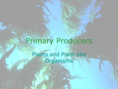 Primary Producers Plants and Plant-like Organisms.