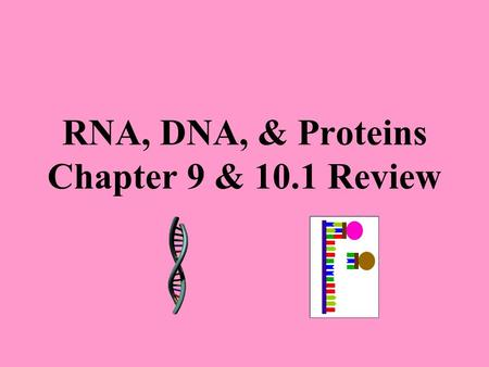 RNA, DNA, & Proteins Chapter 9 & 10.1 Review