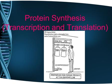 Protein Synthesis (Transcription and Translation).