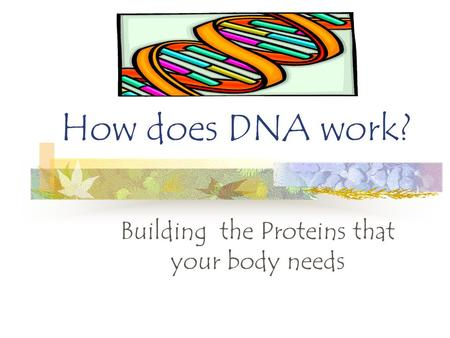 How does DNA work? Building the Proteins that your body needs.