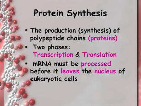 Protein Synthesis The production (synthesis) of polypeptide chains (proteins) Two phases: Transcription & Translation mRNA must be processed before it.