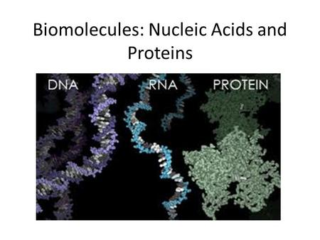 Biomolecules: Nucleic Acids and Proteins