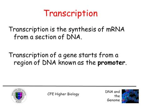 Transcription Transcription is the synthesis of mRNA from a section of DNA. Transcription of a gene starts from a region of DNA known as the promoter.