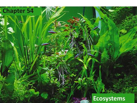 2005-2006 Ecosystems Chapter 54. 2005-2006 Ecosystem Community of organisms plus the abiotic factors that exist in a certain area.