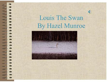 Louis The Swan By Hazel Munroe Trying to find a place! This is my mom getting ready to try to find a nice place for her eggs!