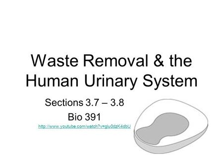 Waste Removal & the Human Urinary System