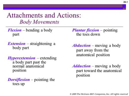 Attachments and Actions: Body Movements