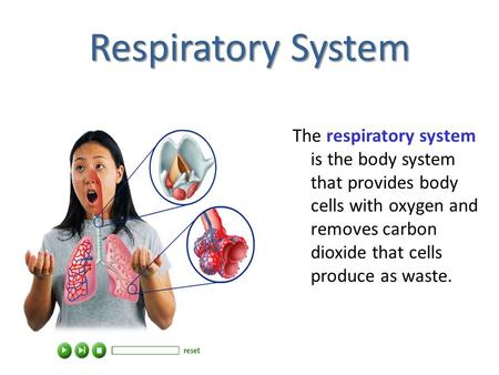 Respiratory System The respiratory system is the body system that provides body cells with oxygen and removes carbon dioxide that cells produce as waste.