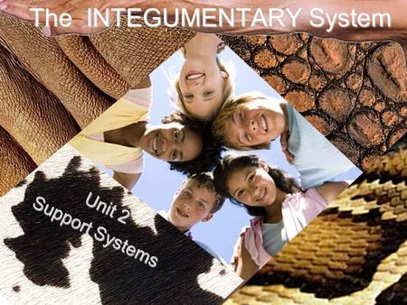 The INTEGUMENTARY System Unit 2 Support Systems. Functions of the Skin Protection Vitamin D Production Sensory Organ Temperature Regulation Protection.