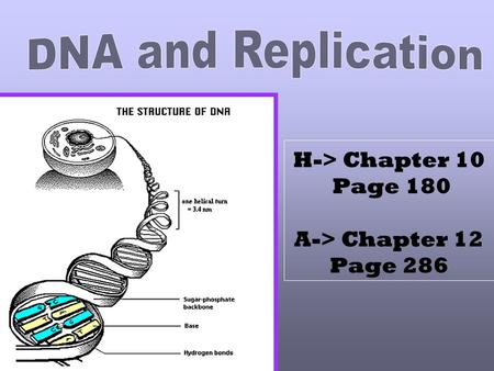 H-> Chapter 10 Page 180 A-> Chapter 12 Page 286 If you unwrap all the DNA you have in all your cells, you could reach the moon! 6000 times!!!