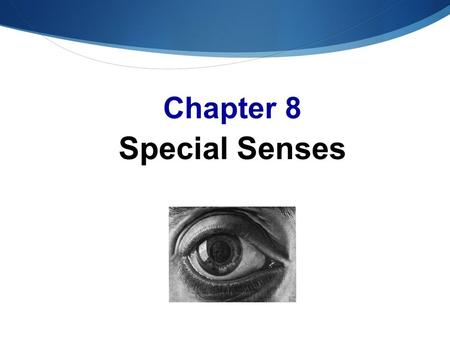 Chapter 8 Special Senses. The Senses  Special senses  Smell  Taste  SIGHT  Hearing  Equilibrium Lady website.