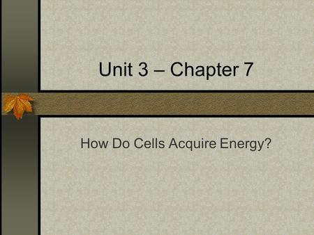 Unit 3 – Chapter 7 How Do Cells Acquire Energy?. I. Sunlight and Survival A.Autotrophs = self-nourishing B.Photoautotrophs = sunlight captured to drive.