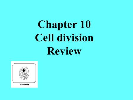 Chapter 10 Cell division Review. This spot that holds the 2 chromatid copies together is called a ______________________ centromere The phase of the cell.
