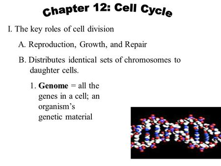 Chapter 12: Cell Cycle I. The key roles of cell division