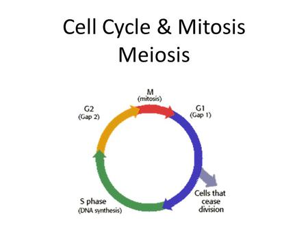 Cell Cycle & Mitosis Meiosis