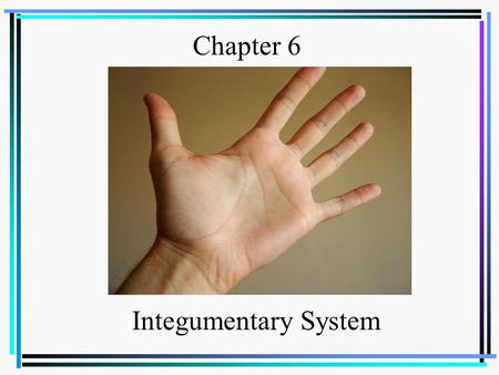 Chapter 6 Integumentary System.