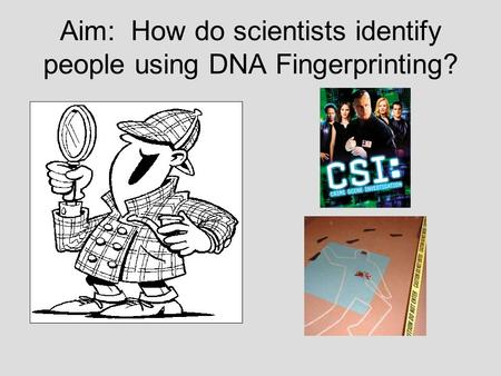 Aim: How do scientists identify people using DNA Fingerprinting?