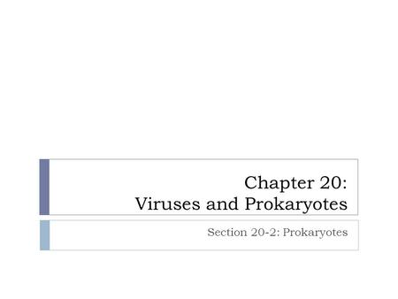Chapter 20: Viruses and Prokaryotes