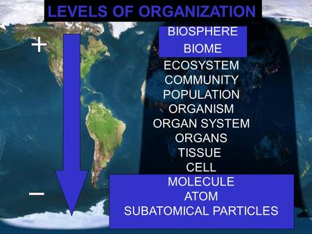 LEVELS OF ORGANIZATION BIOSPHERE BIOME ECOSYSTEM COMMUNITY POPULATION ORGANISM ORGAN SYSTEM ORGANS TISSUE CELL MOLECULE ATOM SUBATOMICAL PARTICLES BIOSPHERE.