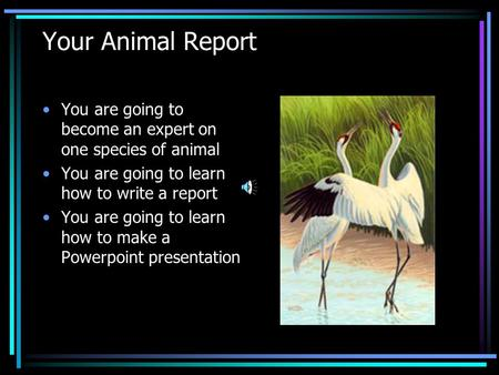 Your Animal Report You are going to become an expert on one species of animal You are going to learn how to write a report You are going to learn how to.
