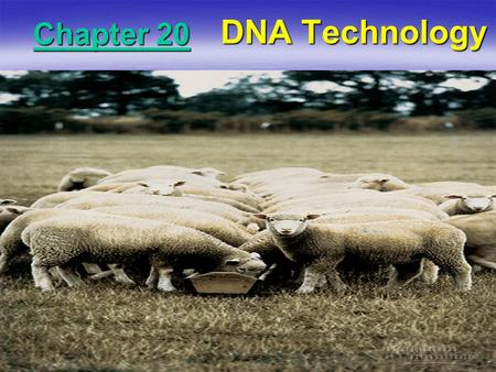 Chapter 20 DNA Technology. DNA Cloning  Gene cloning allows scientists to work with small sections of DNA (single genes) in isolation. –Exactly what.