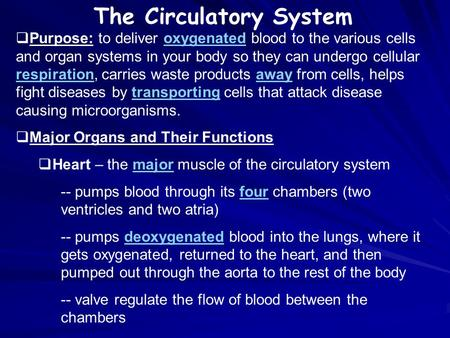 The Circulatory System  Purpose: to deliver oxygenated blood to the various cells and organ systems in your body so they can undergo cellular respiration,