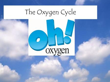 The Oxygen Cycle. Definition of Oxygen Oxygen – a colorless, odorless, tasteless gas Denser than air Poor conductor of heat and electricity.