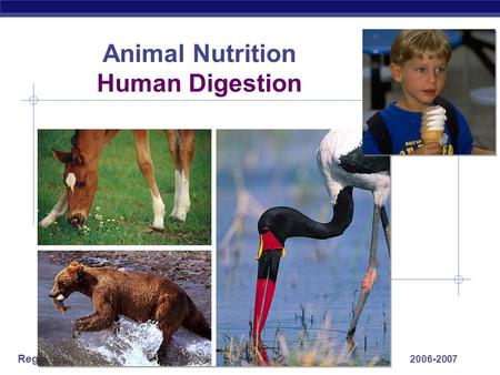Regents Biology 2006-2007 Animal Nutrition Human Digestion.