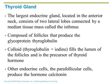 Thyroid Gland The largest endocrine gland, located in the anterior neck, consists of two lateral lobes connected by a median tissue mass called the isthmus.