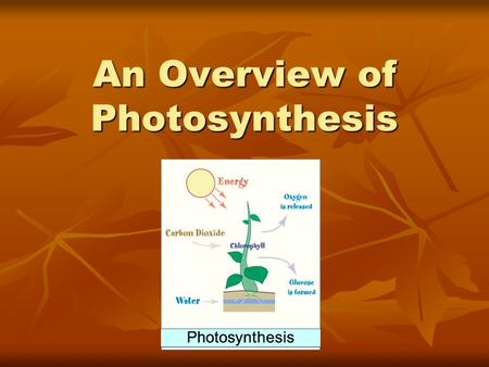 An Overview of Photosynthesis. The Big Picture All organisms need energy to carry out essential functions (growth, movement, maintenance, repair, reproduction).