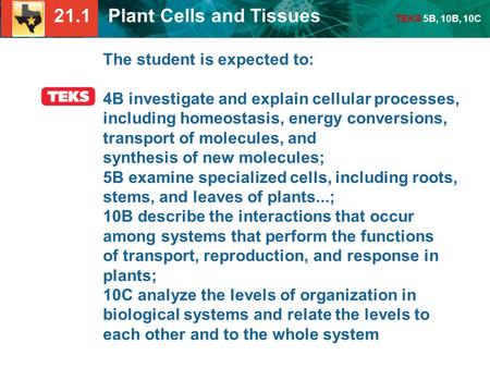 21.1 Plant Cells and Tissues TEKS 5B, 10B, 10C The student is expected to: 4B investigate and explain cellular processes, including homeostasis, energy.