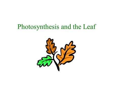 Photosynthesis and the Leaf. Energy A.The sun is the source of energy for almost all life on Earth B.The sun's energy is transferred into a useable form.