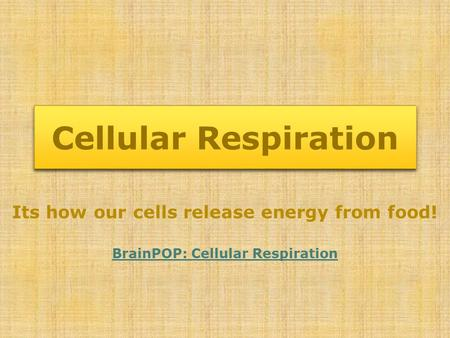 Cellular Respiration Its how our cells release energy from food!