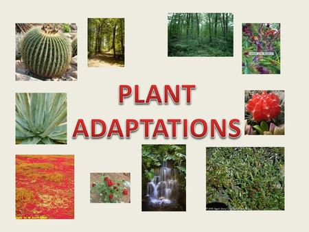 All animals and plants have adaptations that help them survive in their environment. Examples of Plant Adaptations: Support/food storage: Above ground.