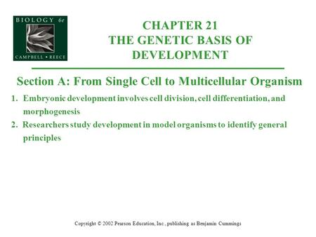CHAPTER 21 THE GENETIC BASIS OF DEVELOPMENT Copyright © 2002 Pearson Education, Inc., publishing as Benjamin Cummings Section A: From Single Cell to Multicellular.