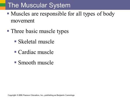 Copyright © 2006 Pearson Education, Inc., publishing as Benjamin Cummings The Muscular System  Muscles are responsible for all types of body movement.
