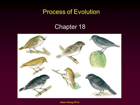 Process of Evolution Chapter 18 Mader: Biology 8th Ed.