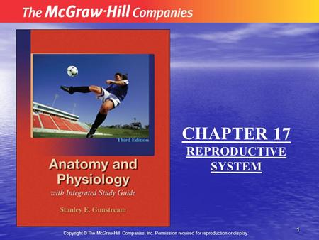 1 Copyright © The McGraw-Hill Companies, Inc. Permission required for reproduction or display. CHAPTER 17 REPRODUCTIVE SYSTEM.