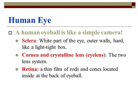 Human Eye  A human eyeball is like a simple camera! Sclera: White part of the eye, outer walls, hard, like a light-tight box. Cornea and crystalline lens.