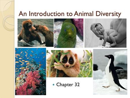 An Introduction to Animal Diversity Chapter 32. Characteristics of Animals Multi-cellular Heterotrophic eukaryotes - ingestion Lack cell walls – collagen.