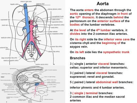 Aorta The aorta enters the abdomen through the aortic opening of the diaphragm in front of the 12th thoracic. It descends behind the peritoneum on the.