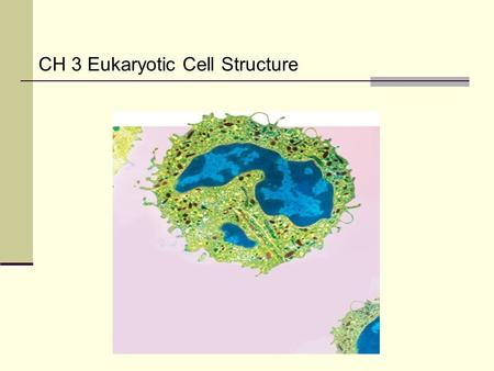 CH 3 Eukaryotic Cell Structure