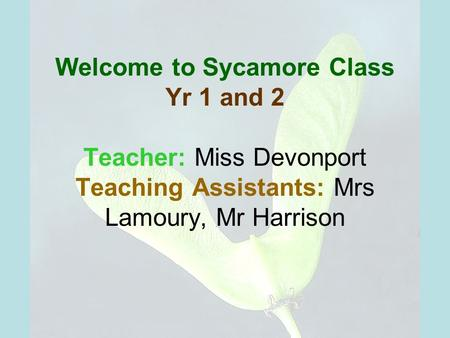 Welcome to Sycamore Class Yr 1 and 2 Teacher: Miss Devonport Teaching Assistants: Mrs Lamoury, Mr Harrison.