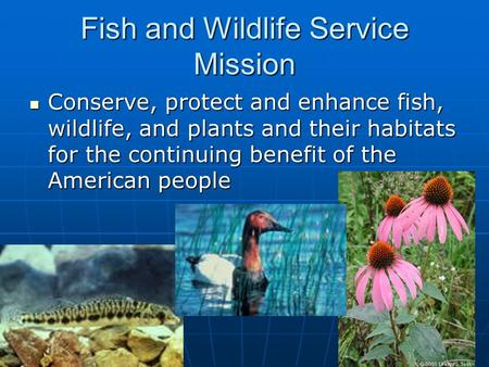 Fish and Wildlife Service Mission Conserve, protect and enhance fish, wildlife, and plants and their habitats for the continuing benefit of the American.
