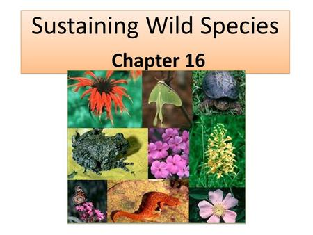 Sustaining Wild Species Chapter 16. Review: Explain the difference in genetic diversity, species richness, <strong>and</strong> ecosystem diversity.